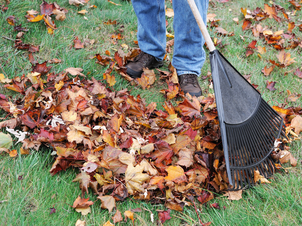 Schedule a professional fall yard cleanup service in Lake Charles or Iowa, LA